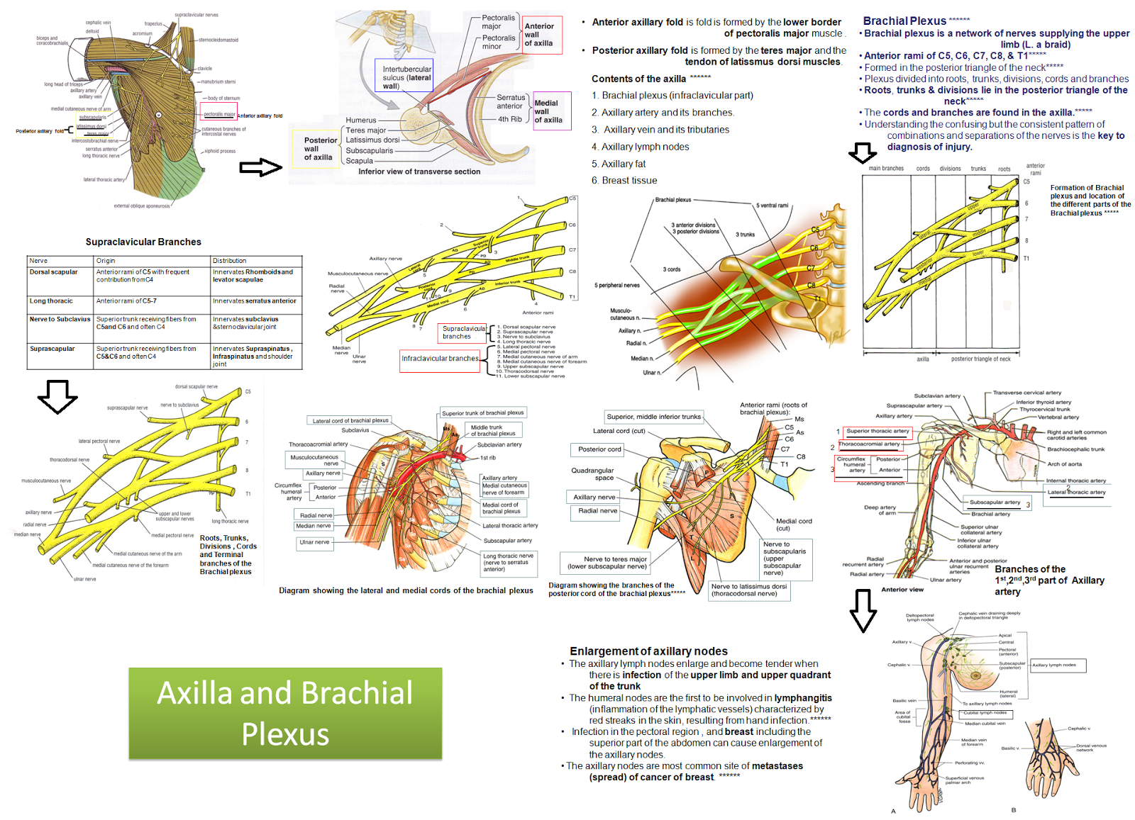 medical concept maps   musculoskeletal system