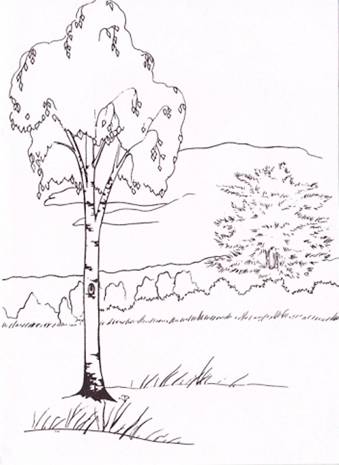 Рисунки на тему природа раскраски