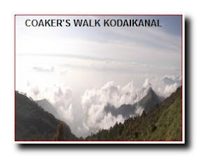 KODAIKANL COAKERS WALK