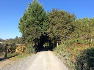 een tunnel van bomen
