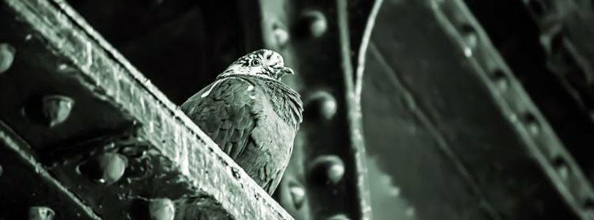 Belle couverture facebook oiseaux