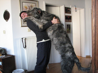 Gsv Pics - Photos with Poetry: Worlds Biggest DOGS ... - photo#23