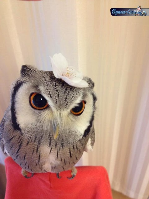 funny bird owl picture