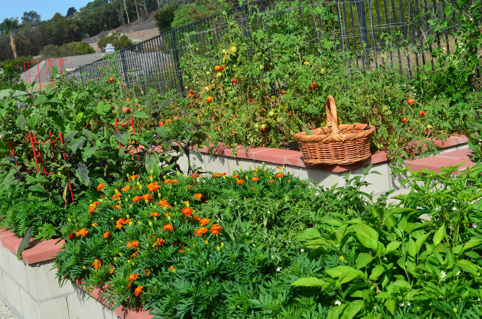 Kitchen Gardens In India Entertaining From An Ethnic Indian Kitchen Kitchen Garden Abundance