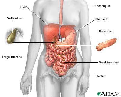 Stomach Acid Symptoms After Drinking