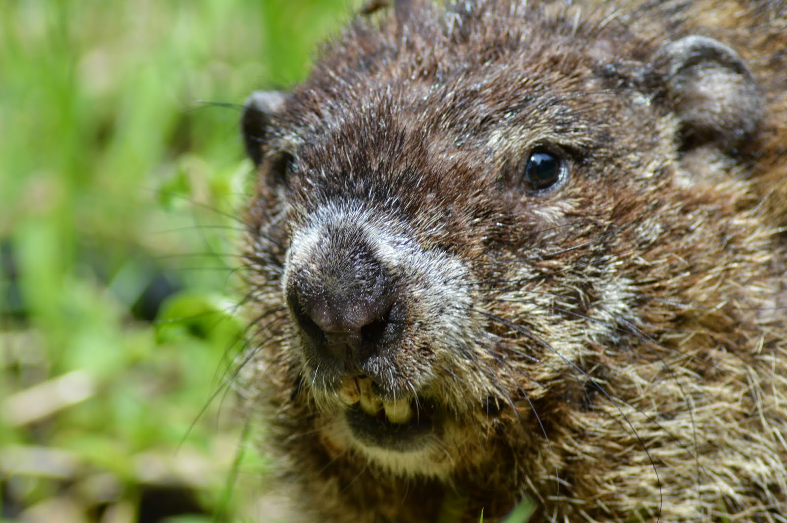small mammals of arkansas trails of arkansas u0026 now california