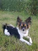 Min hund