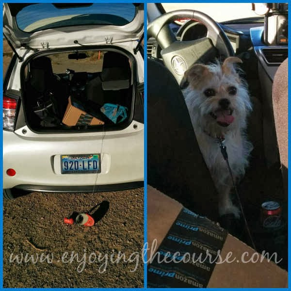 Scion iQ and Border Terrier