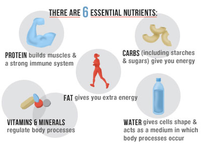 There Are Six Essential Nutrients That Your Body Needs On A Daily Basis They Are Proteins Fats Carbohydrates Vitamins Minerals And Water