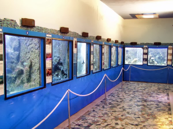 "OPEN DAY ""L'ACQUARIO ED I SEGRETI DELLO STRETTO DI MESSINA"""