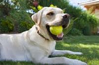K9 Eğitimli Köpek Oyunu