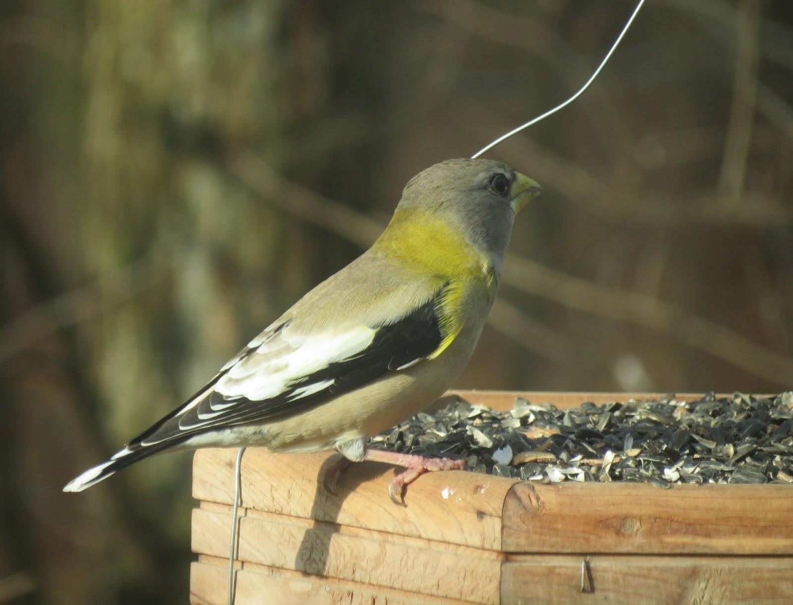Indy Parks Nature Blog