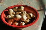 mushrooms sunning