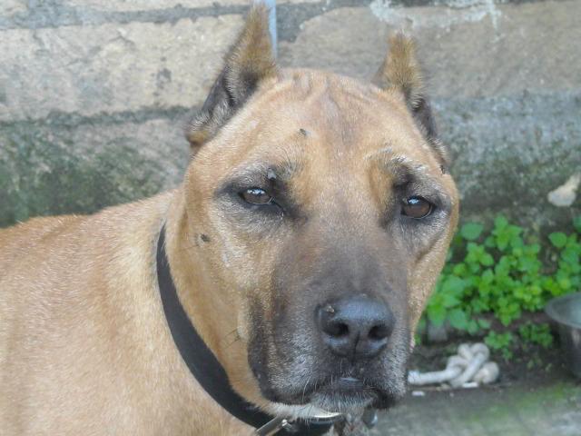 Adotta un cane a siracusa la felicit di due cani for Cani giocherelloni