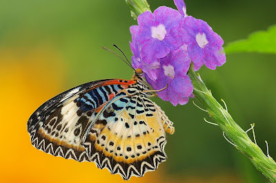 butterfly photography tutorial
