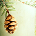 GET READY FOR CHRISTMAS:  MEET THE HUMBLE PINECONE
