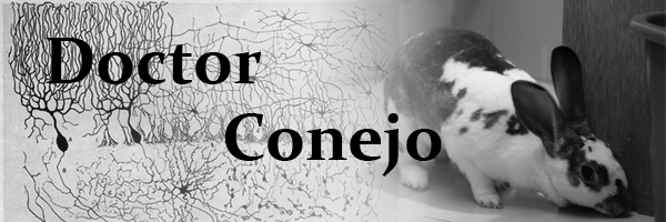 Doctor Conejo