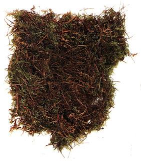 Сфагновый мох
