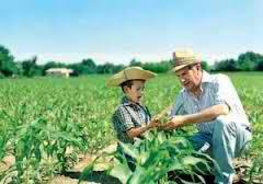 ελεύθερη διακίνηση των παλιών ποικιλιών σπόρων