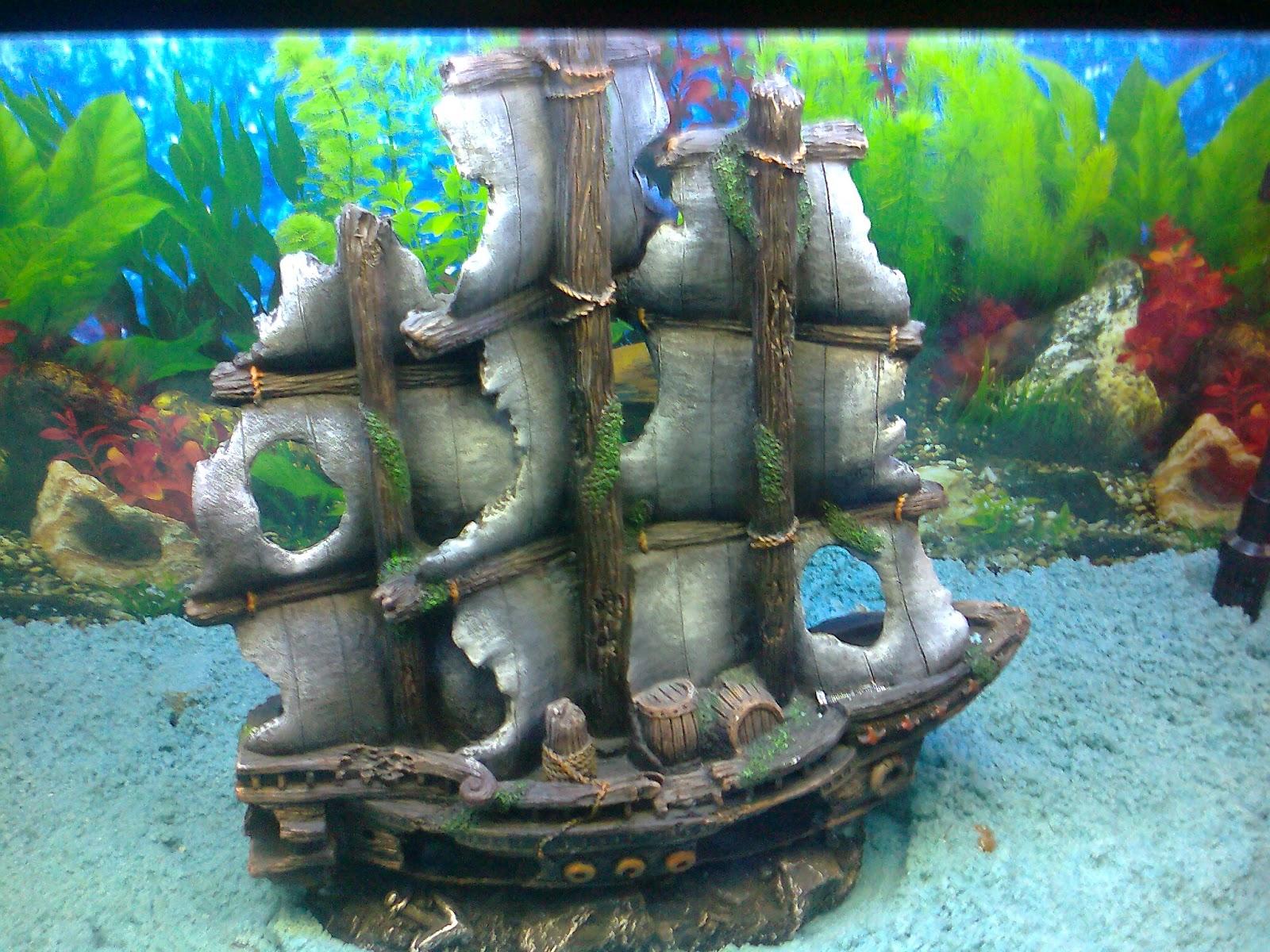 Pet shop ahmedabad colourful aquarium fish exhibition for Aquarium decoration ship