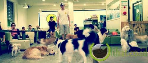 Kafe anjing