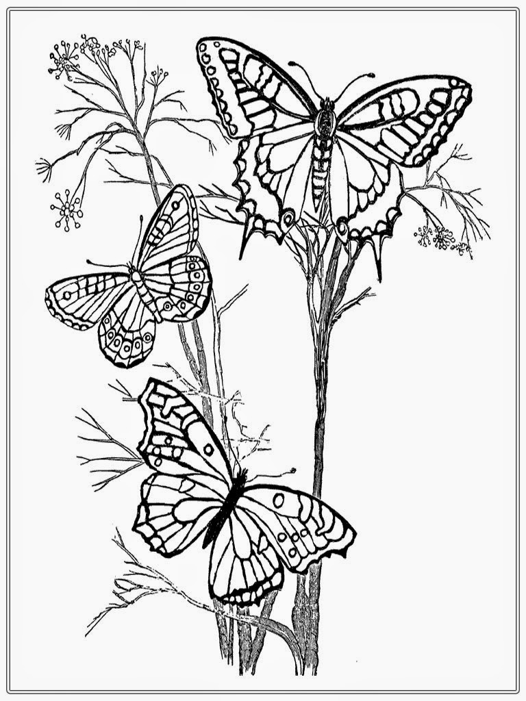 realistic butterflies coloring pages - photo#21