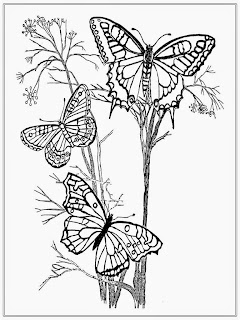 Butterflies Adult Coloring Pages