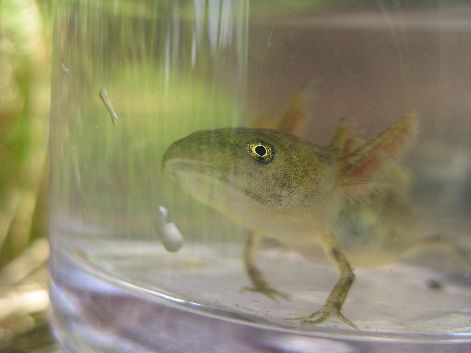 Смогла разгадать голая кожа помогает лягушке дышать ваша совесть