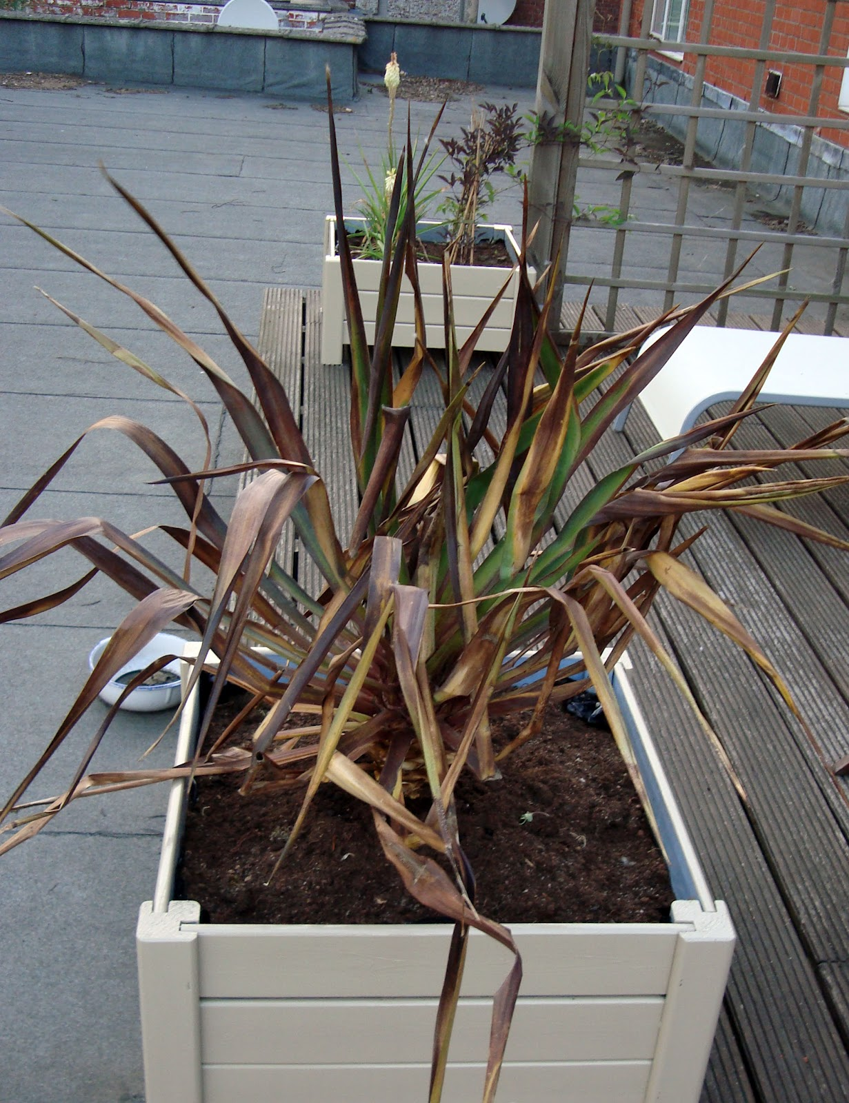 Xx garden yucca for Bouture yucca exterieur
