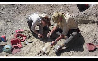 Seres humanos gigantes fizeram parte da evolução humana, um osso do dedo mindinho, de 1,85 milhão de anos, poderá, literalmente, apontar para novos conceitos sobre a evolução humana. A descoberta é a mais antiga em relação a uma mão humana. O ossinho foi encontrado na Garganta de Olduvai, na Tanzânia.