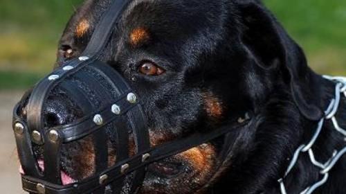 Αποτέλεσμα εικόνας για σκύλος άγριος