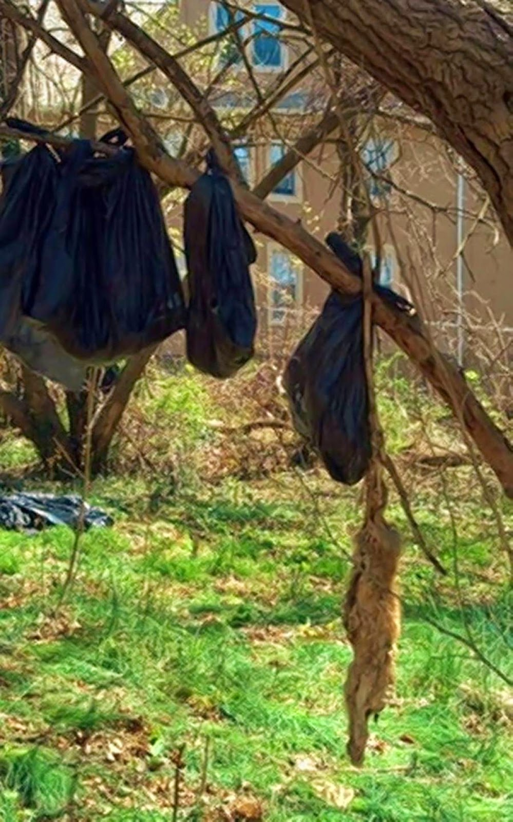 25 Dead Cats Found Hanging In Ritualistic Display