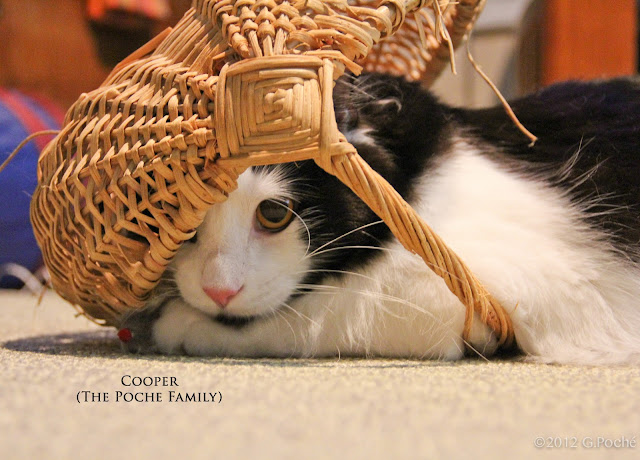 Mr. May, Cooper, black and white cat in a basket