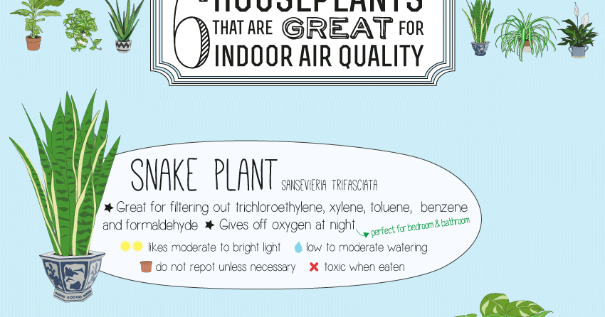 House of thol 6 houseplants that are great for indoor air for Interior design and indoor air quality