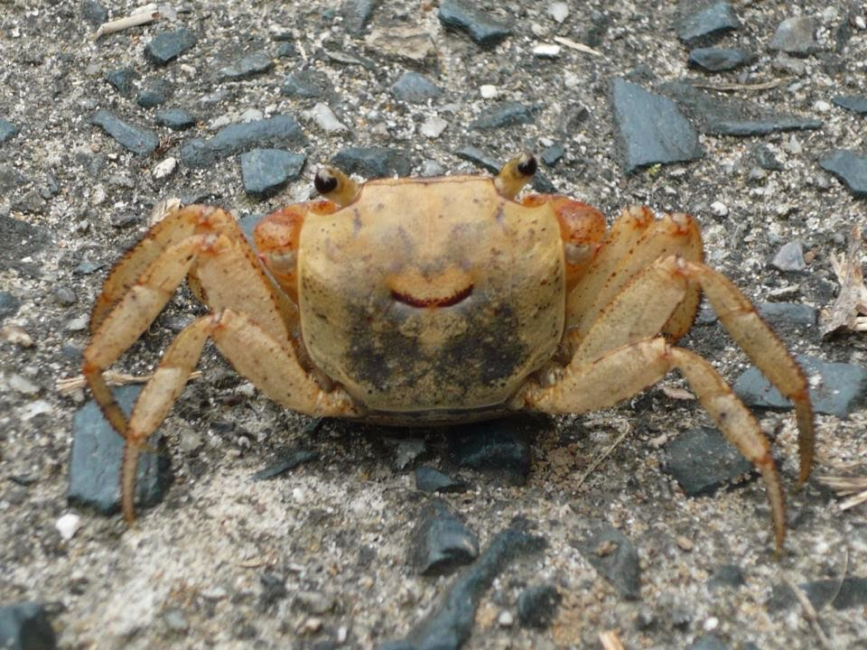 Funny animals of the week - 21 February 2014 (40 pics), happy crab