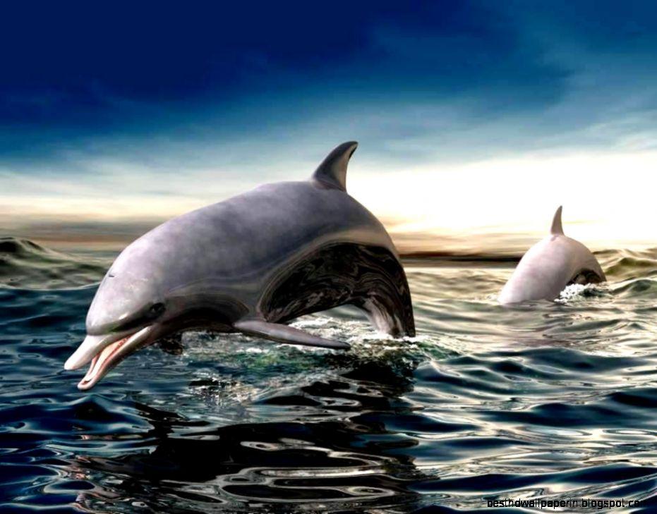 3D Dolphin Screensavers Wallpaper