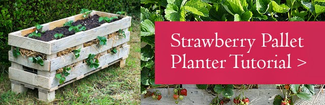 Strawberry Pallet Planter Tutorial