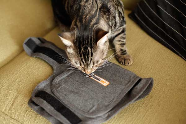 Cat Lady Doctor Helps Crazy Cat People Find Happiness Thundershirt