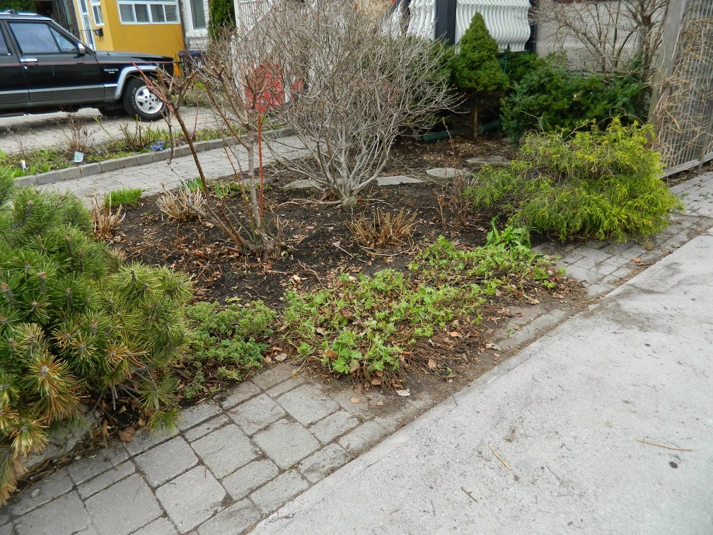 Paul Jung Gardening Services Toronto Leslieville spring garden cleanup after