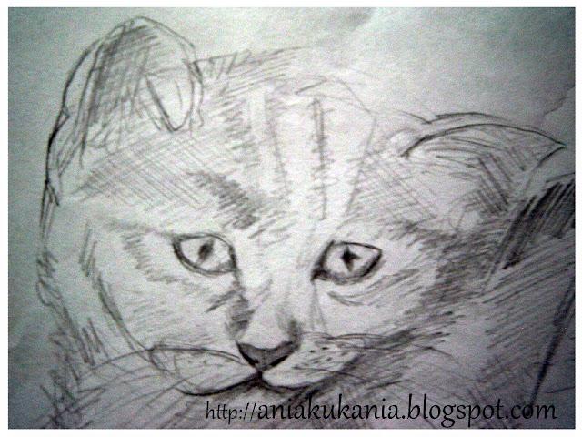 kot Rysowane ołówkiem