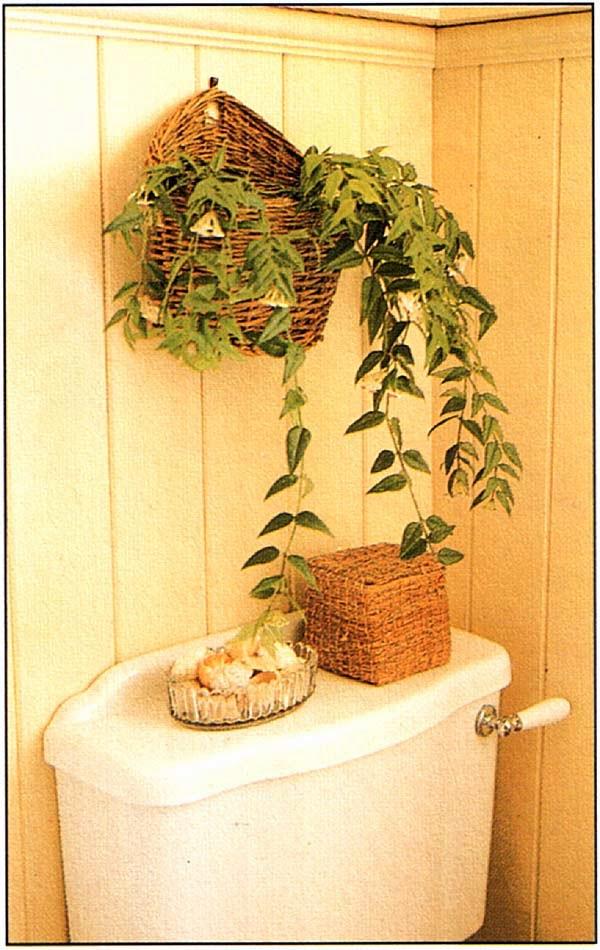 Шире используйте ампельные растения