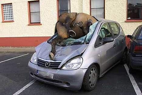 صور غريبة - صفحة 6 Funny-Driving-Youre-doing-it-wrong