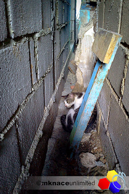 mknace unlimited™ | cat delivering kitten in an alley