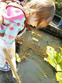 pond spotting