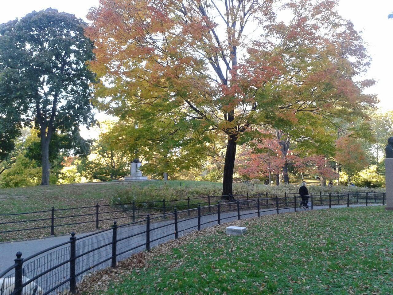 imagen de Árboles en otoño en Central Park,Nueva York
