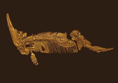 Cryopterygius skeleton