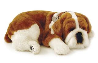 english bulldog animal wallpaper dogs puppies pets