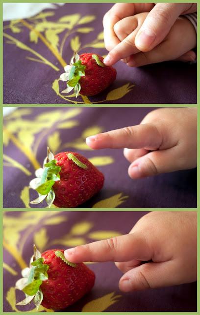 Gusano sorpresa en la fresa