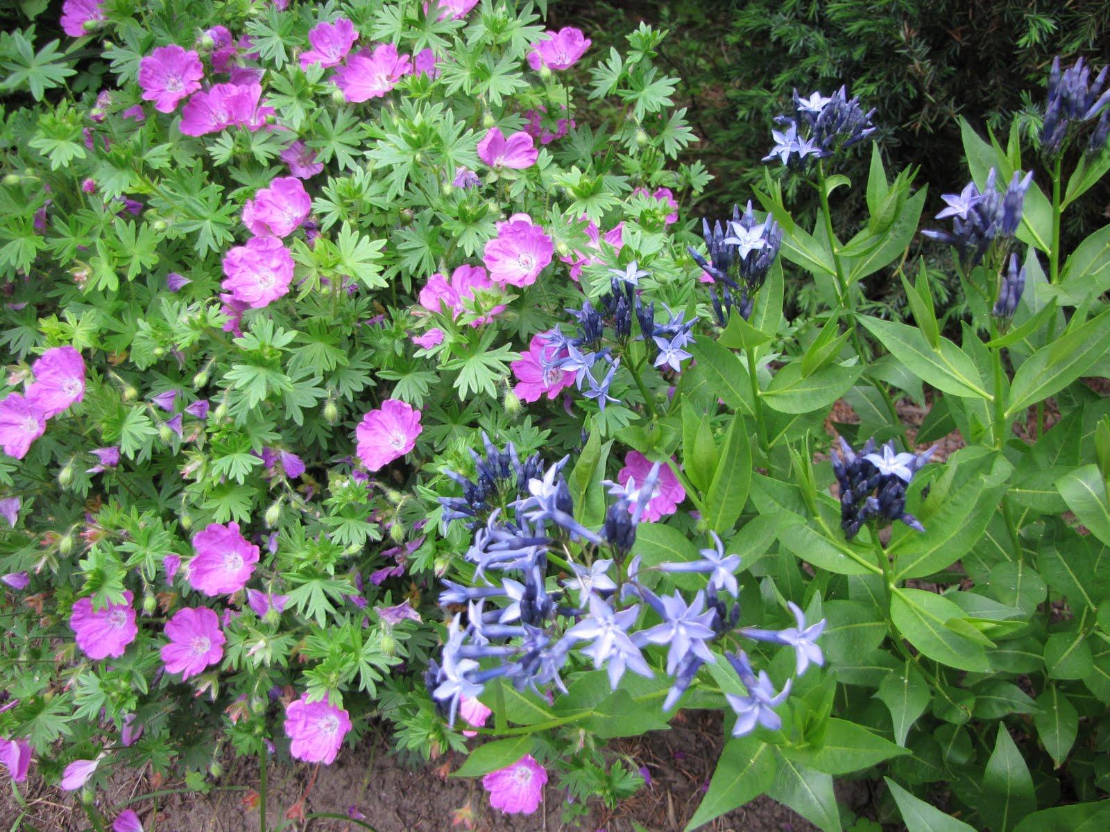 Gardening Pomona Pink And Blue