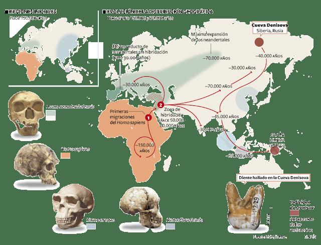 regiones iniciales de la vida homo sapiens,neandertal,erectus